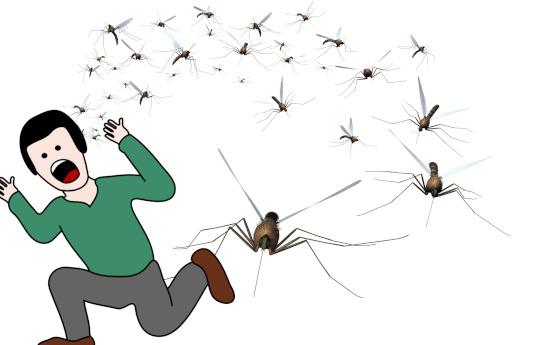 How to avoid mosquito bites